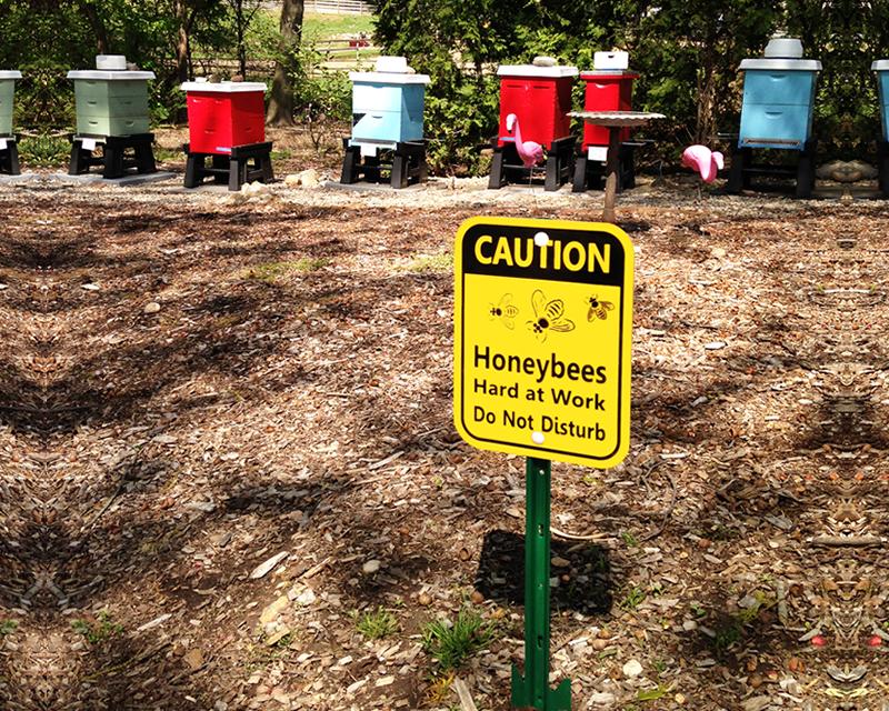 Bee Warning Signs