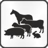 Barn and Equestrian Safety Quiz