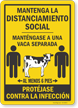 Maintain Social Distancing Keep 1 Cow Apart Spanish Sign