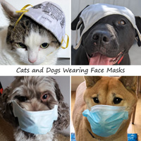 Cats and dogs wearing a mask